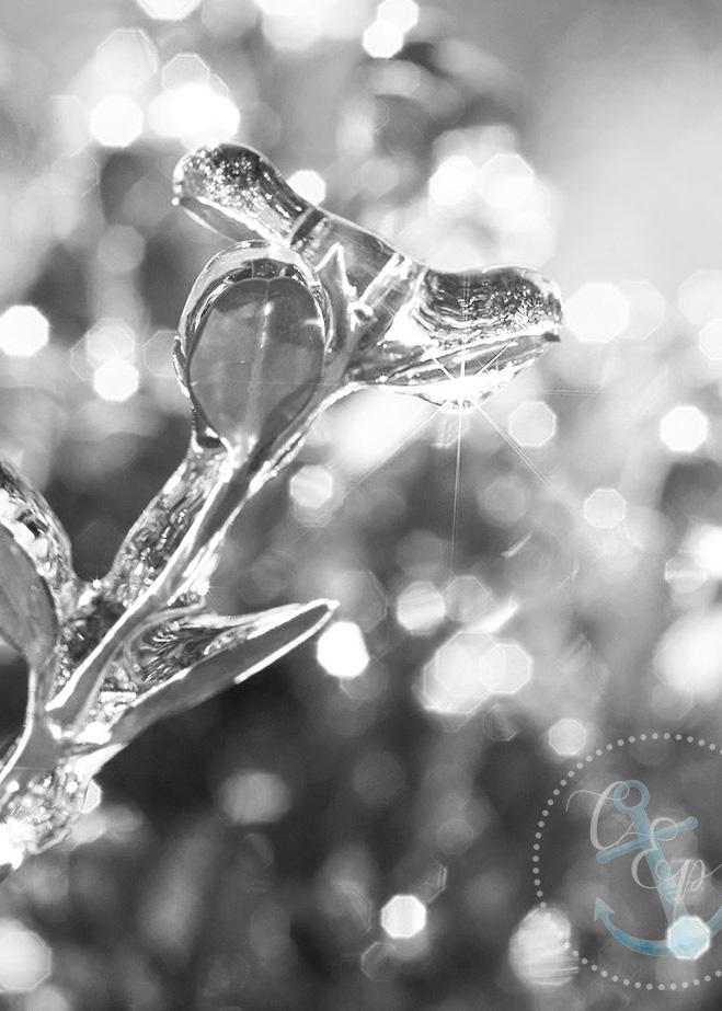 Sunstar tutorial, Starburst Tutorial, Cristina Elisa Photography LLC