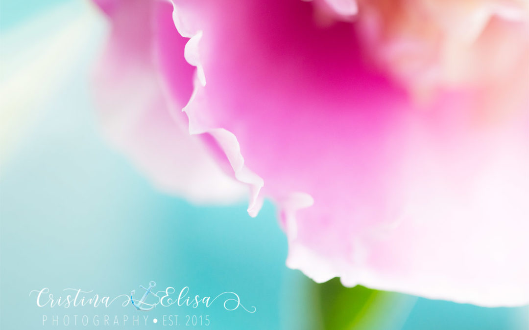 Petal in the light | Maryland fine art photographer