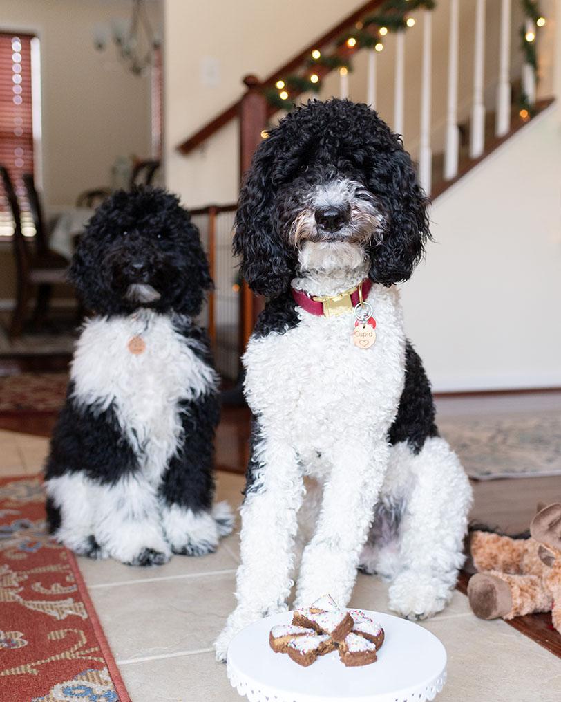 Cristina's dogs