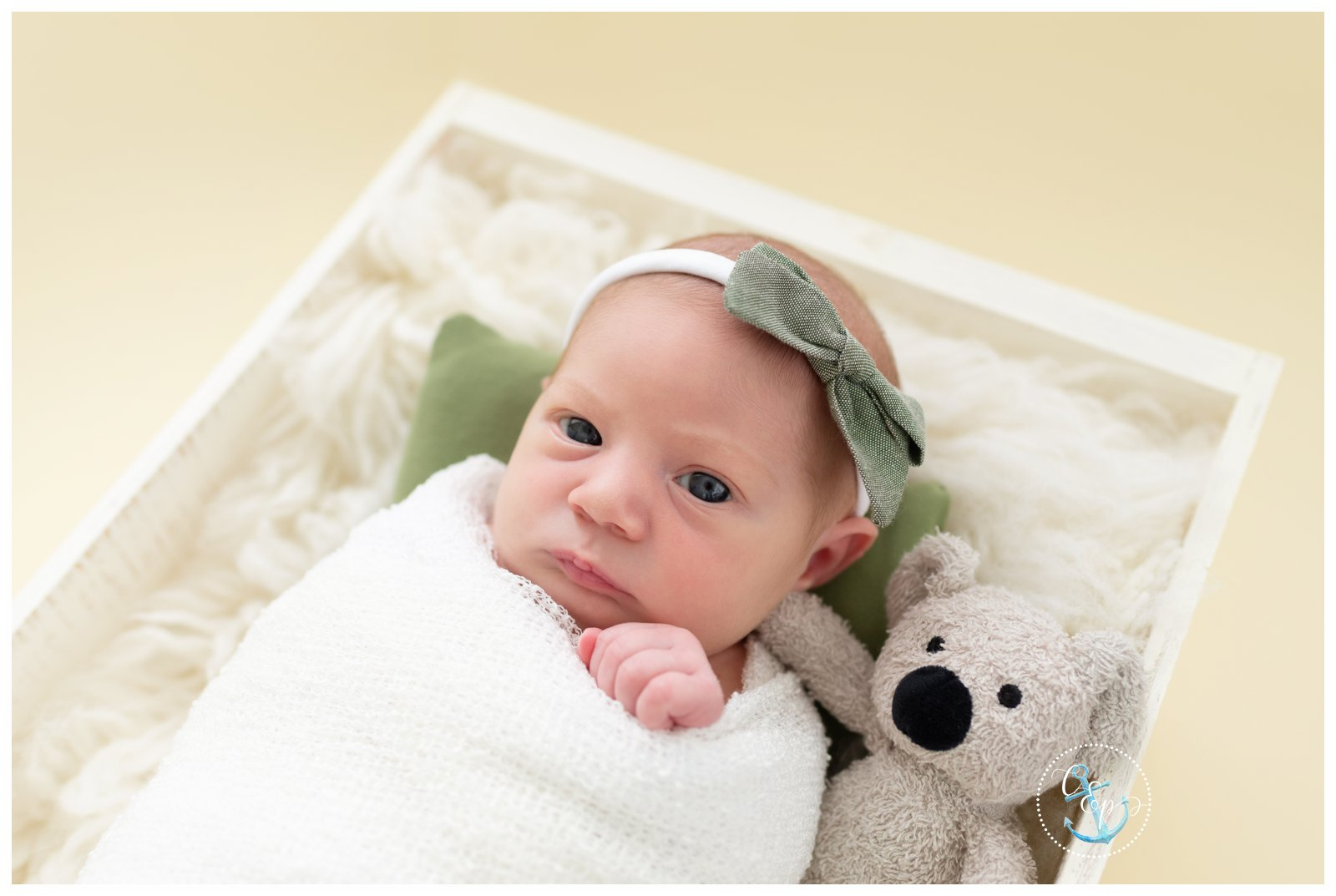 swaddled newborn baby in crate with koala, creamy background, Cristina Elisa Photography Frederick MD